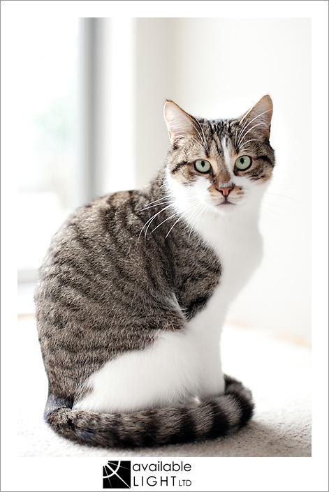 auckland pet photographer