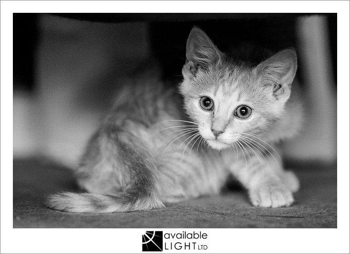 north shore pet photographer