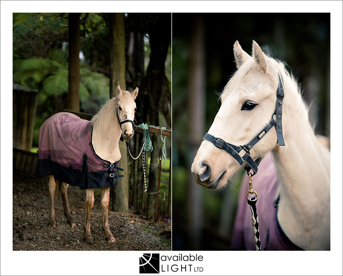 auckland animal portrait photographer