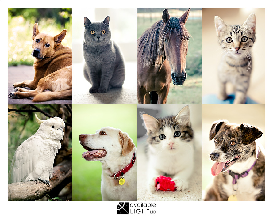auckland pet photographer